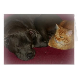 Pit Bull and Tabby Cat Friends Forever Card