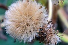 seeds13