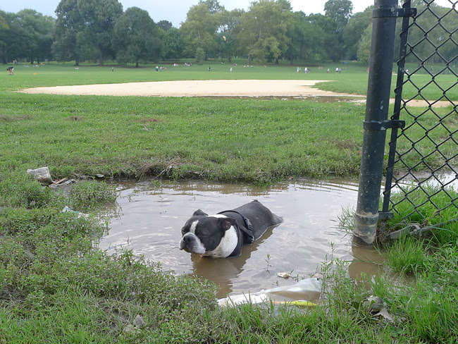 Hippo Dog