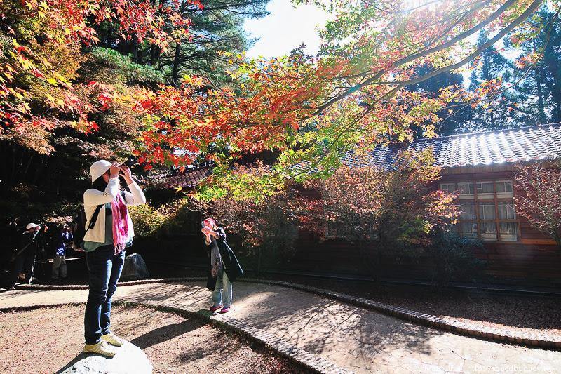 福壽山農場楓紅-34