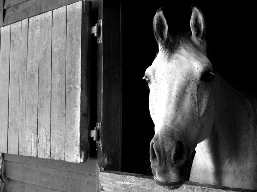 Black And White Horse Images