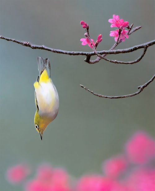 1276772232_beautiful_bird_photos_15 (500x616, 45Kb)