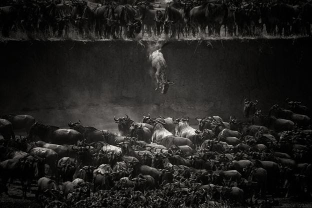 Mara river, Tanzania - Nicole Cambre/www.tpoty.com