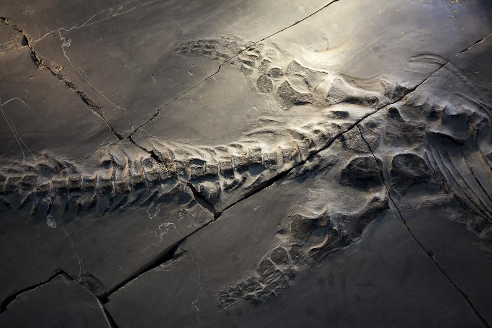 Chengjian Fósiles