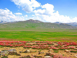 English: The Deosai National Park in Skardu di...