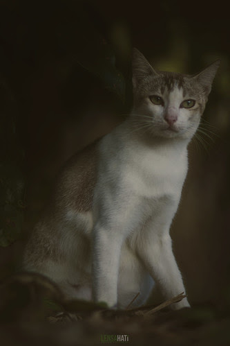 Local House Cat II