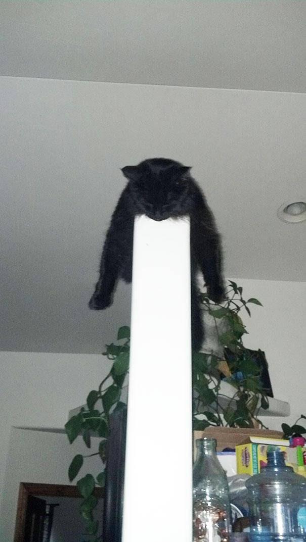 25 Γάτες που κοιμήθηκαν στα πιο άκυρα σημεία.