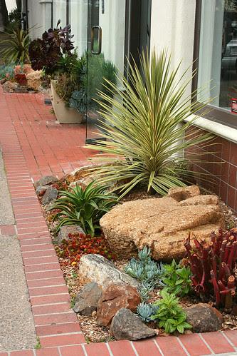 store front succulents