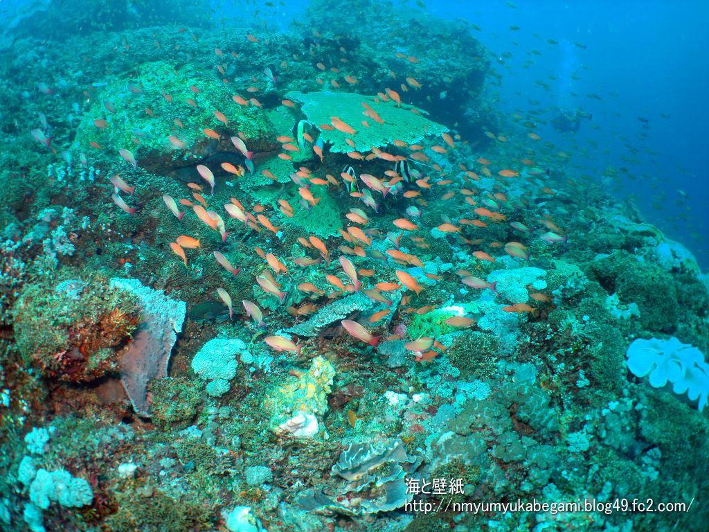 バリ島の壁紙8
