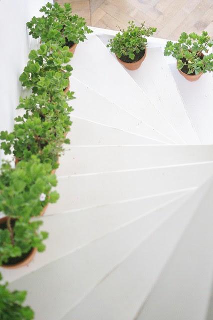 stairway geraniums