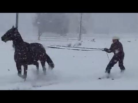 Esquía sobre la nieve con un caballo