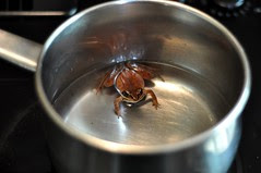 frog in a pot 1