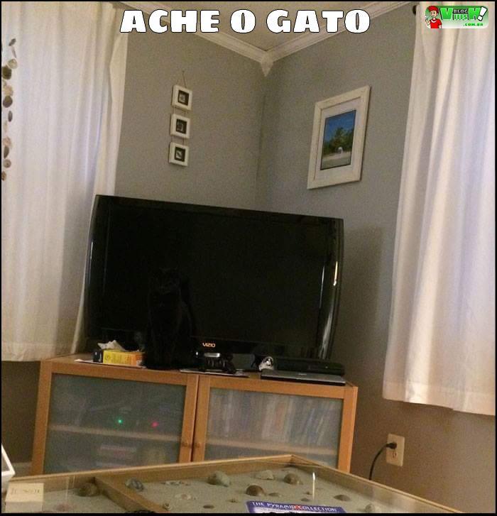 Blog Viiish - Ache o gato