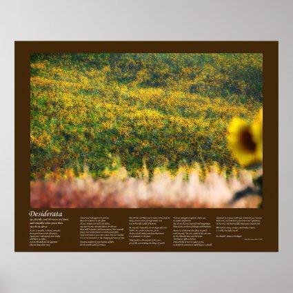 Desiderata - Sunflower Fields in Sunshine Print