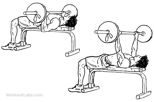 Image result for bench press workout lab
