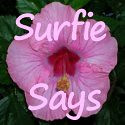 Surfie Says