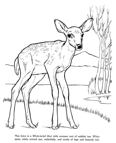 coloring pages animal drawings coloring pages white