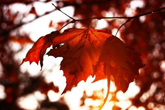 autumn lights.