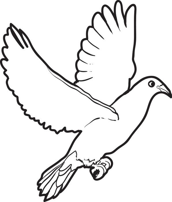 9100 Bird Outline Coloring Pages For Free