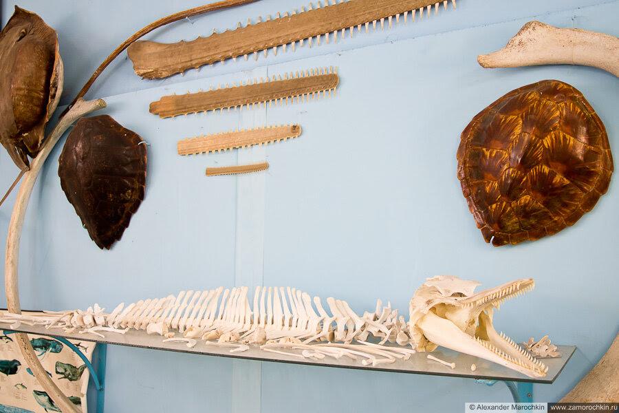 Экспонаты музея ракушек Корфу