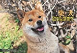 2011カレンダー ドッグズアルバム柴犬