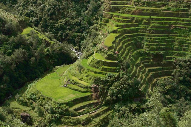 Banaue_Rice_Terrace_Close_Up_(2)