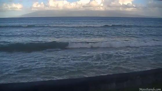 Hawaii Humpback