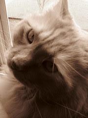 Jasper enjoying some open window time