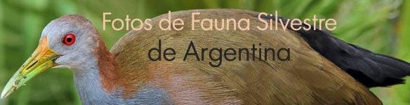 Fotos de aves de Argentina