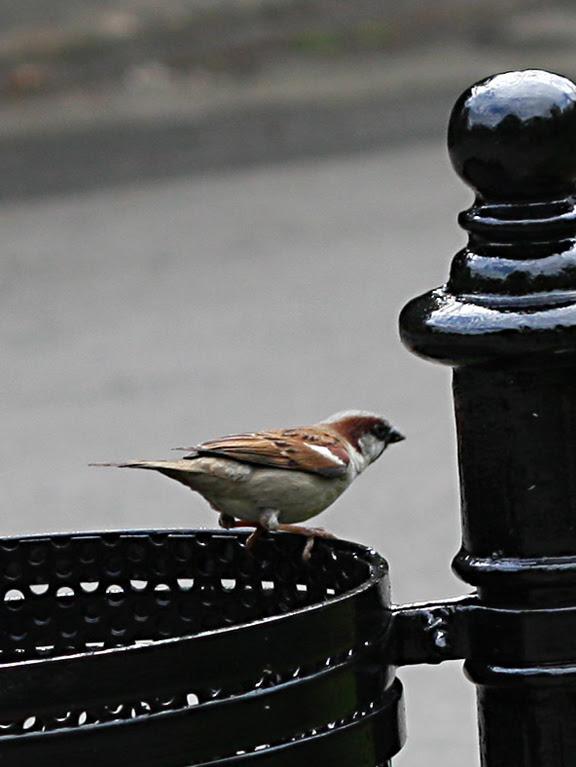 sparrow13