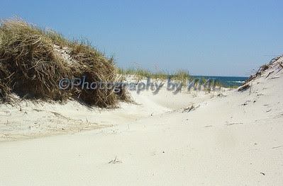 sand dunes at the ocean
