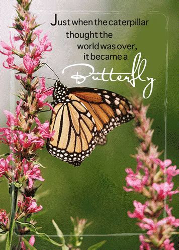 Take Care With Butterfly Wishes. Free Take Care eCards