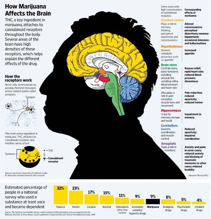 How Marijuana Affects the Brain ?
