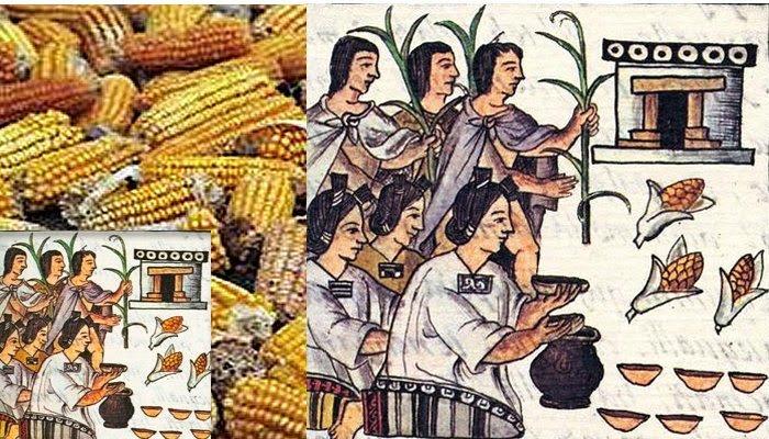 Maize Aztec Symbol