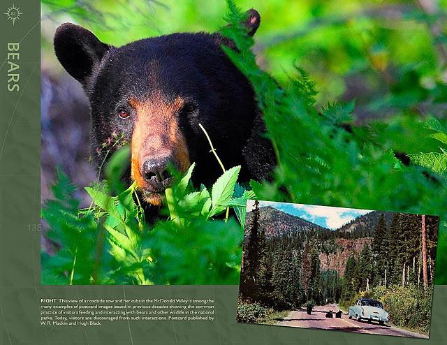 Glacier National Park Book Sample4