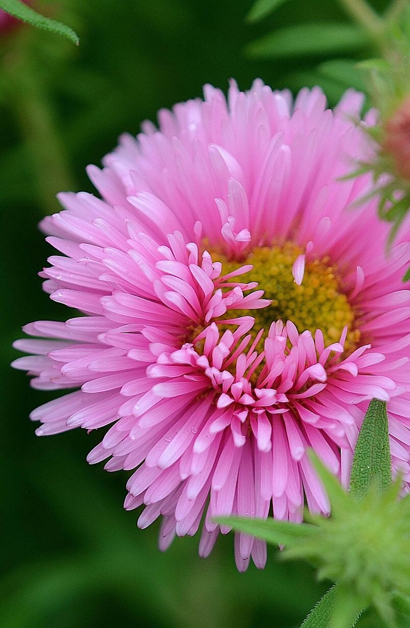 Pink flower photo, 35 best flower photos