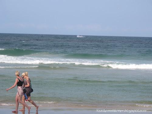 Whale watch, Gold Coast Australia