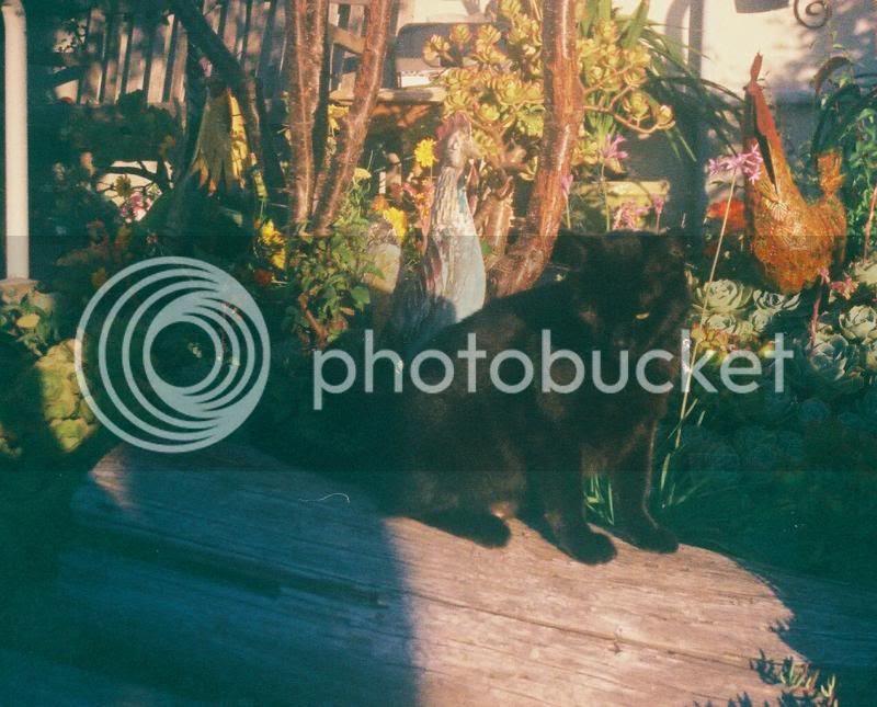 photo 898872969_zps63e1999e.jpg