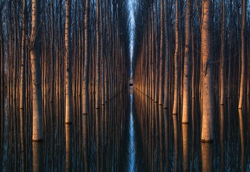 thekhooll:  Playing with Trees These spectacular photographs by Oliver Delgado are no trick, the images are actual real-world scenes. Captured directly in camera, the stunning optical illusions do not involve any digital manipulation.