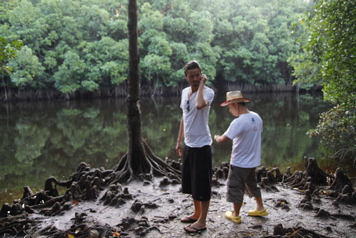 Ming Jin and Jeppe checking the mangrove