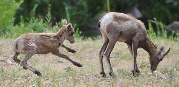 Look, Ma, no feet!
