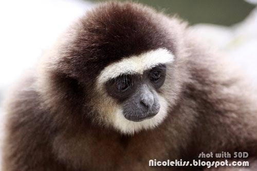 kiki gibbon