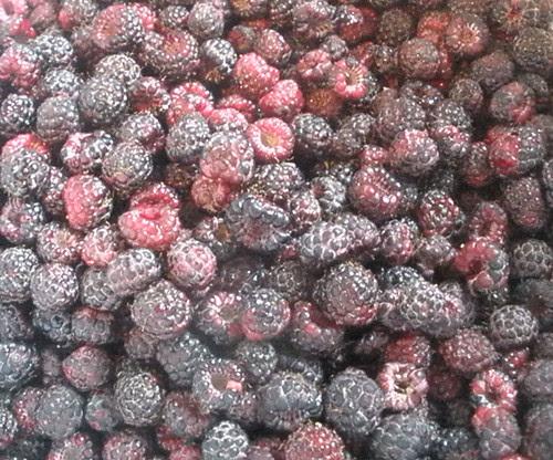 Black Raspberries Ready for Jam