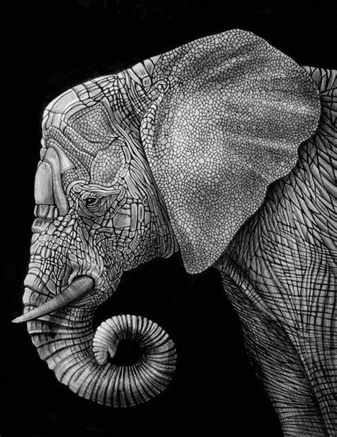 images  elephants illustrations