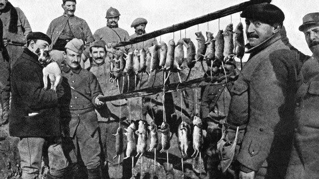 Rats WWi