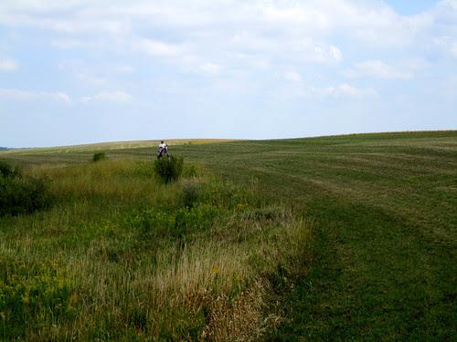 yellowstonefield