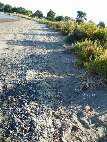 coastal cleanup 036