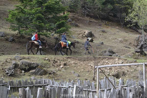 말과 나귀의 피가흐르는 '말나귀'는 차가 들어올 수 없는 오지 마을 위뻥의 유일한 교통수단이다.