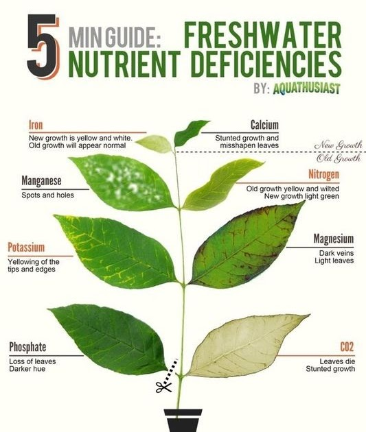 Bloom Nutrition Greens Reddit Propranolols