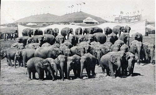 Everyone agrees that the 50 elephant photo above was enhanced by Roland Butler when in fact the closest they came in those days was 47 in 1941 but unfortunately the show only returned to Sarasota with 36 due to the tragic elephant poisoning in Atlanta.